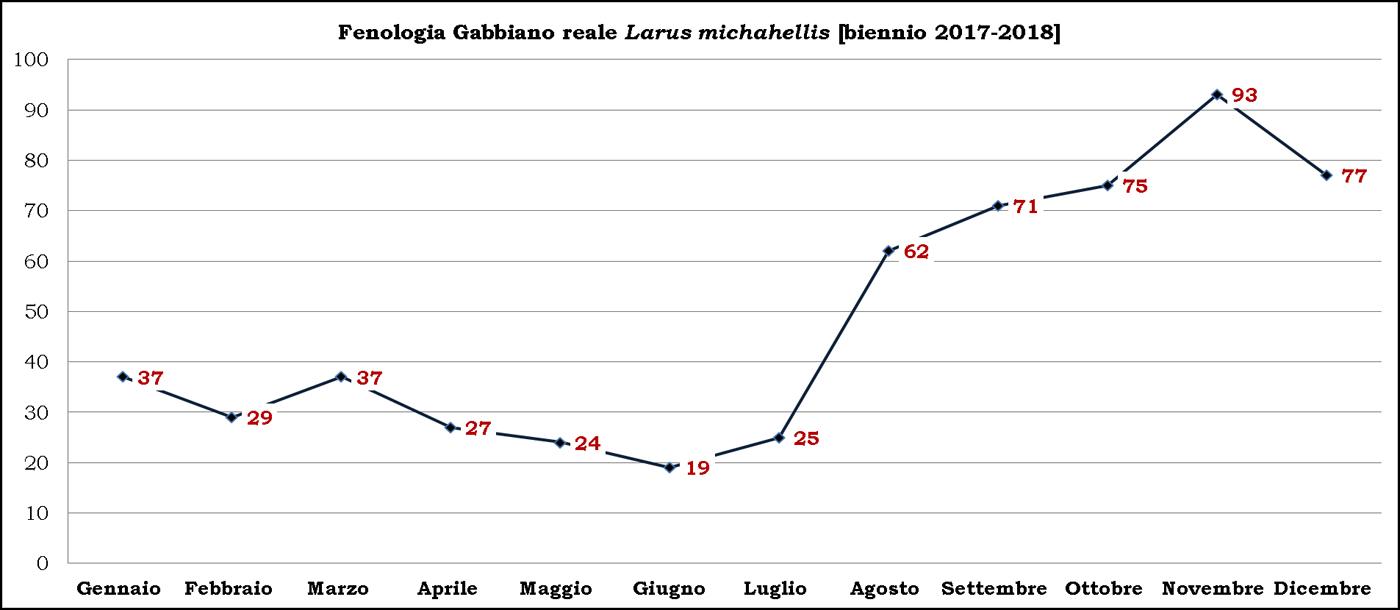 3-Gabbiano reale 2017-2018