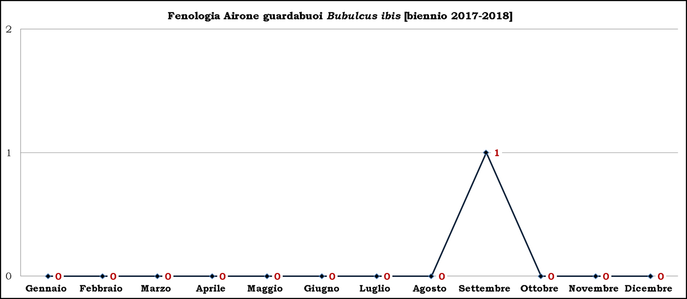 Airone-guardabuoi-2017-2018