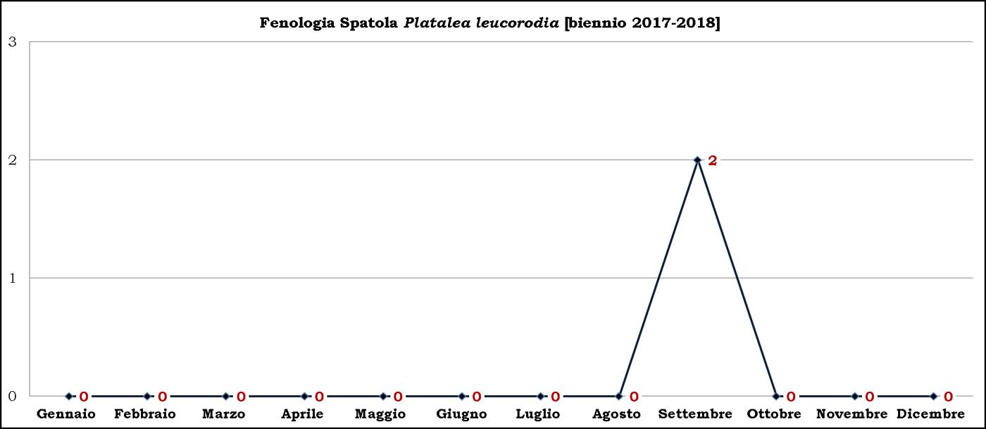 Spatola 2017-2018