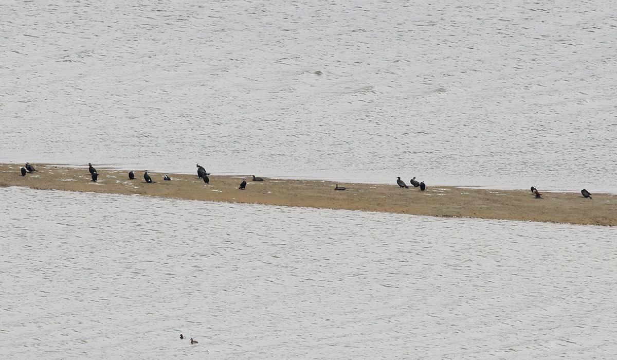10- Riserva lago di campotosto 13.03.2018