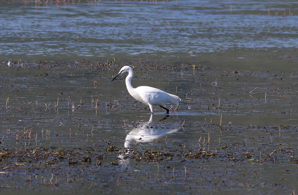 21-galleri stazione ornitologica campotosto E. Strinella
