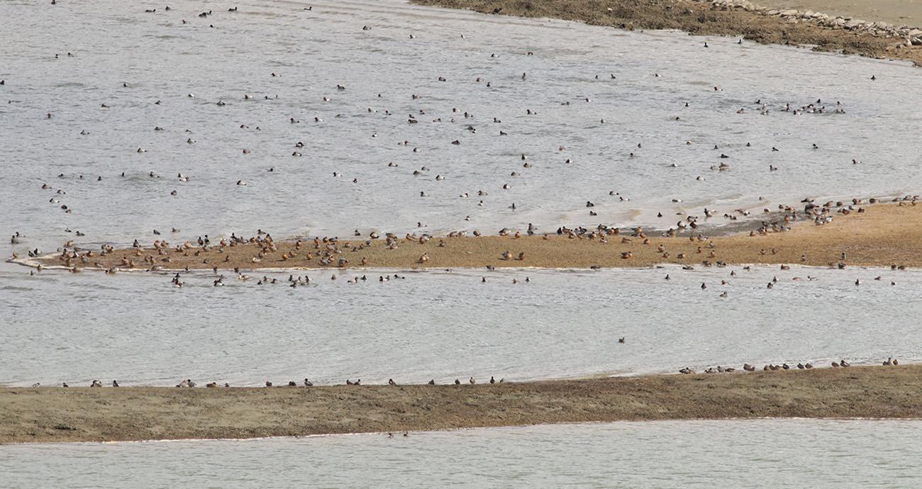 9- Riserva lago di campotosto 13.03.2018