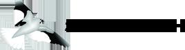logo-snowfinch