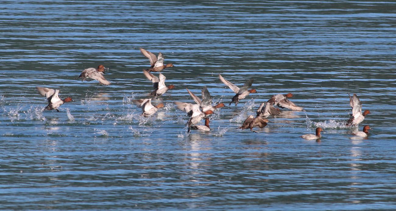 9 - Riserva Lago di Campotosto 28 giugno 2018