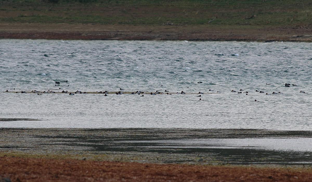 Riserva lago di Campotosto 26 settembre 2018 E. Strinella -7