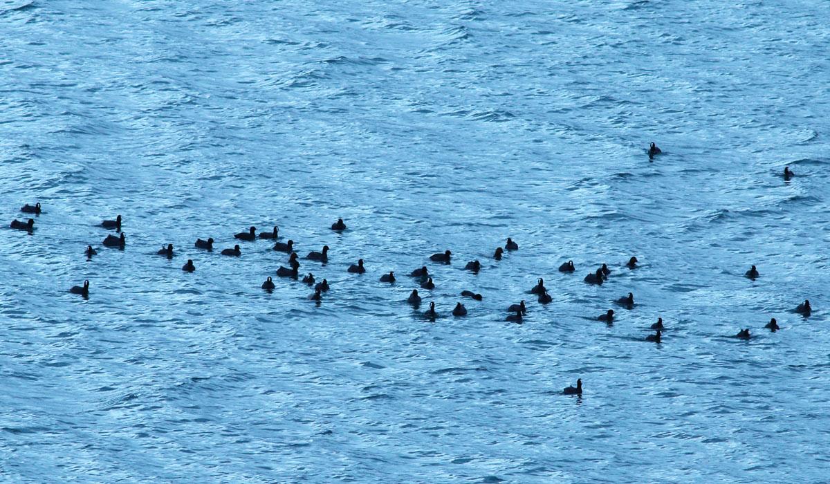 6-Riserva lago di Campotosto 05.11.2018 E. Strinella