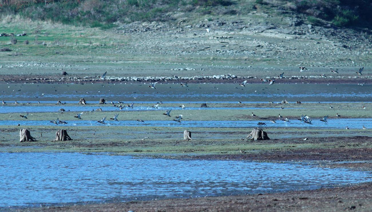 9-Riserva lago di Campotosto 05.11.2018 E. Strinella