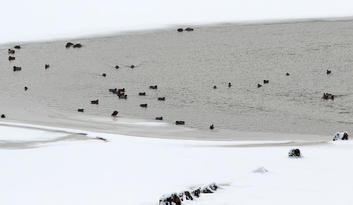 6-Riserva Lago di Campotosto 04.02.2019 e-strinella