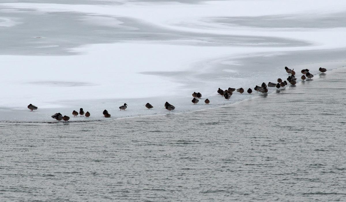7-Riserva Lago di Campotosto 04.02.2019 e-strinella