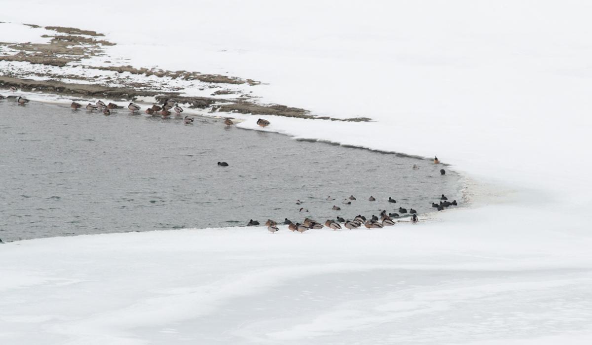 7- Riserva Lago di Campotosto 23 gennaio 2019