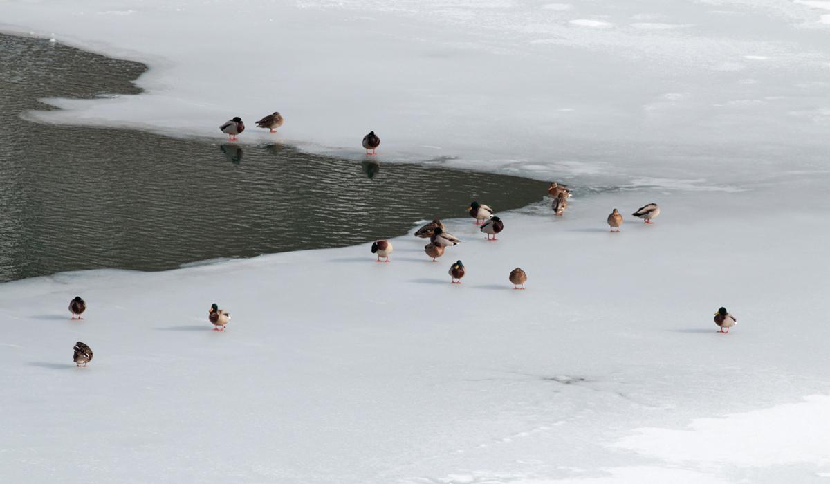 8- Riserva Lago di Campotosto 23 gennaio 2019